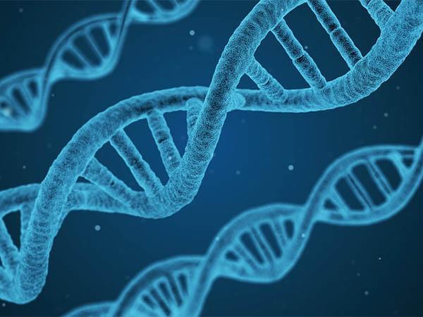 Тест ДНК для получения израильского гражданства